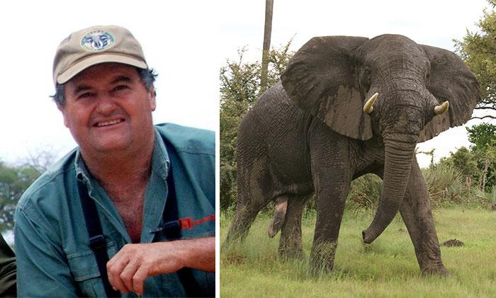 Un elefante pisotea hasta la muerte a su domador en Zimbabue