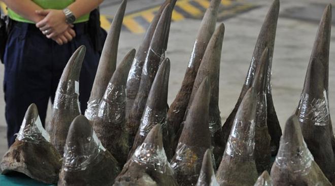 Veinte kilos de cuernos de rinoceronte incautados en Sudáfrica
