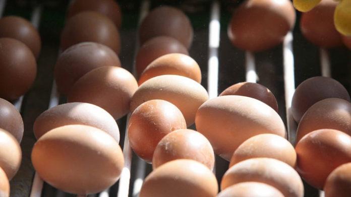 Escándalo de huevos contaminados deja pérdidas por 150 millones de euros solo en Holanda