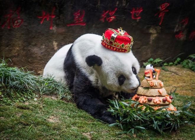 El panda más viejo del mundo muere en China a los 37 años