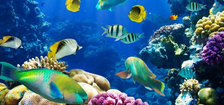 Los peces tienen personalidad