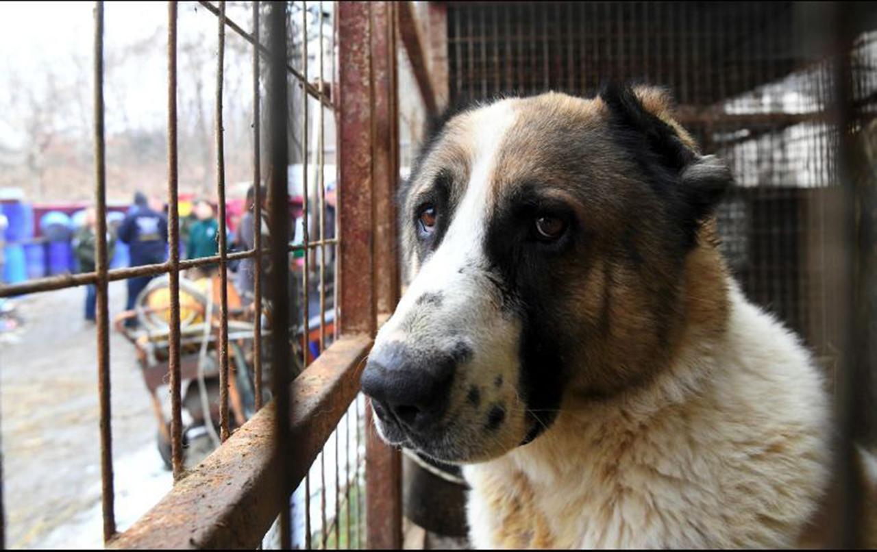 Productor de carne de perro en Corea del Sur, un trabajo mal visto