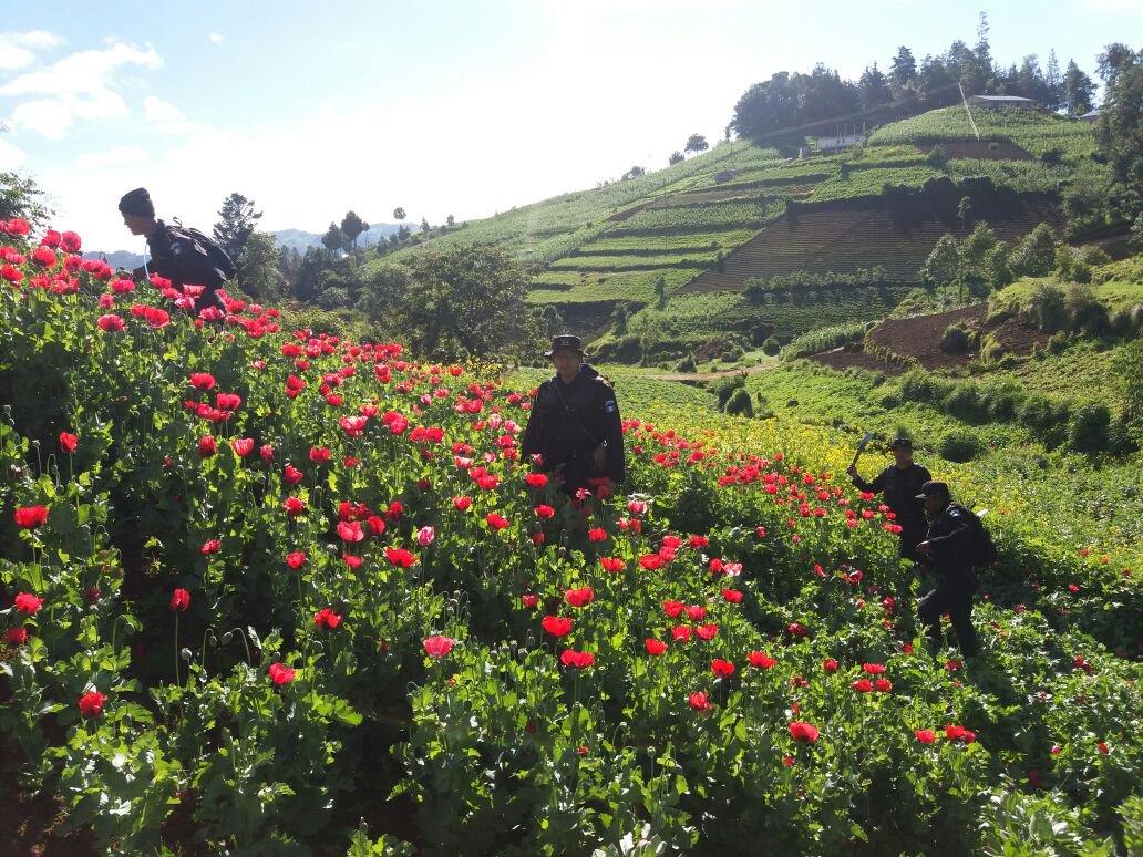 Erradicación de droga EU Emisoras Unidas Guatemala