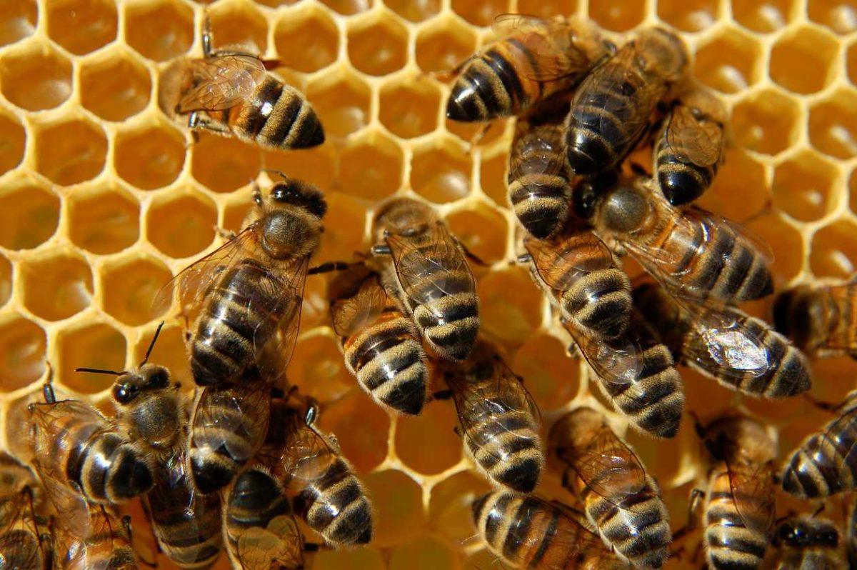 Niño dado de alta tras ser picado por abejas