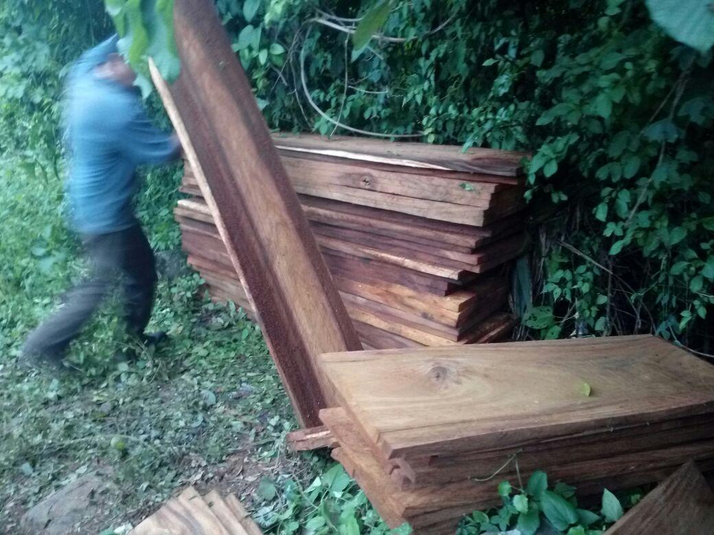 madera Santa Rosa forestal