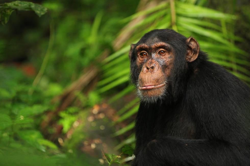 Video viral chimpancé, La Habana Cuba Emisoras Unidas