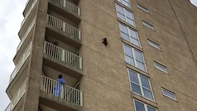 Video viral mapache racoon Ocean City Nueva Jersey Estados Unidos