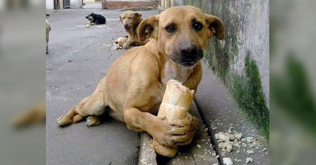 perros bocado veneno Colombia
