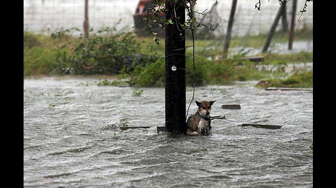 Abandono mascotas huracán michael florence