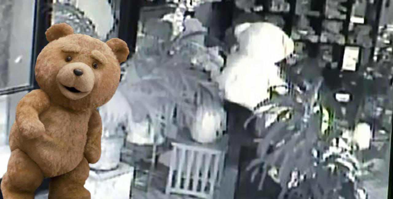 video viral robo Oso peluche california