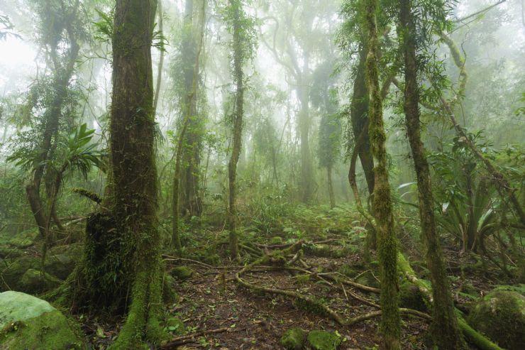 Video viral bosque respira canadá