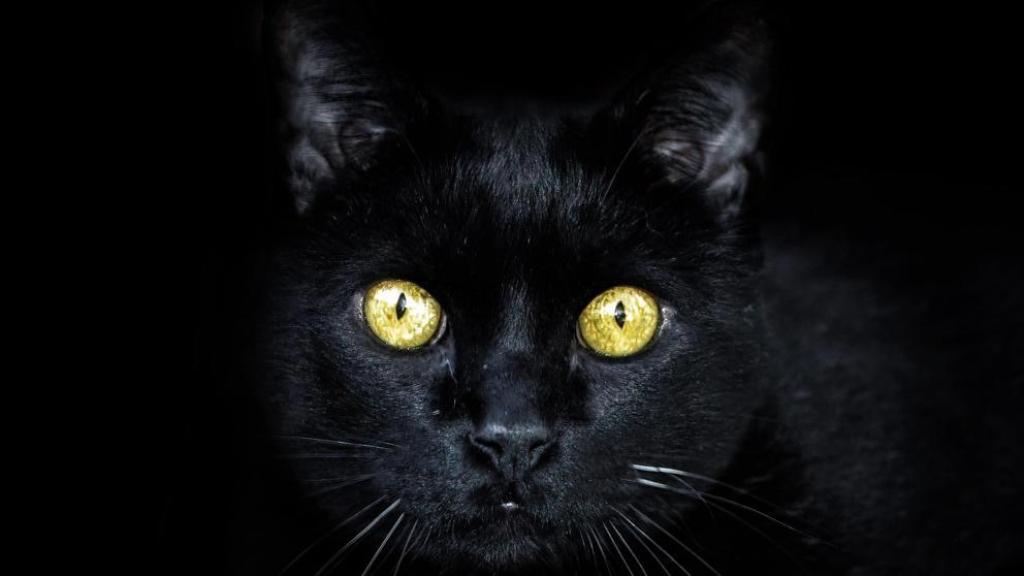 gatos negros realidad o mito Halloween ritos satánicos 31 de octubre
