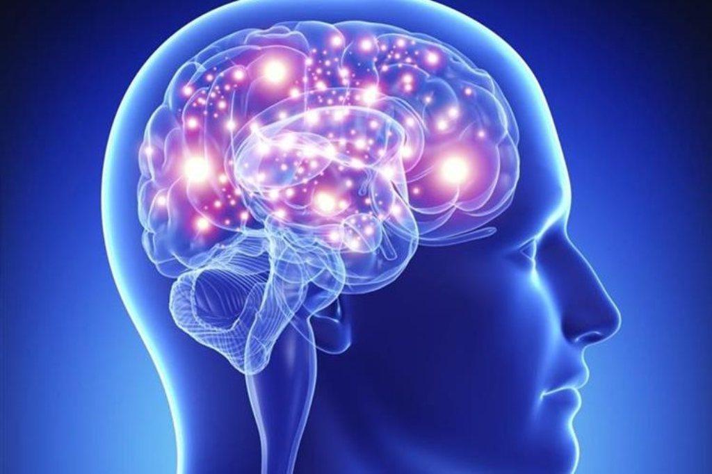 cerebro humano George Paxinos descubrimiento