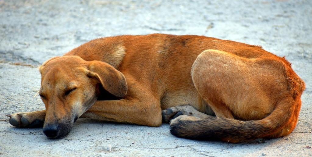 Zacapa perros envenenados Santa Elena, San Diego