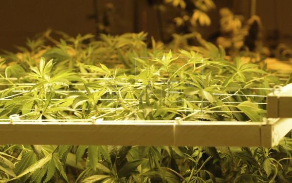 Cinco años de marihuana legal en Colorado