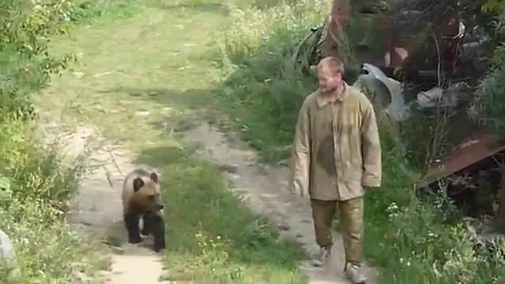 Cazador oso devorado animal Rusia