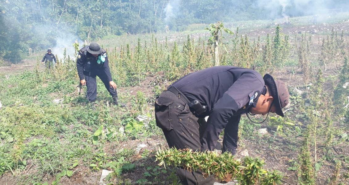 Petén plantación marihuana