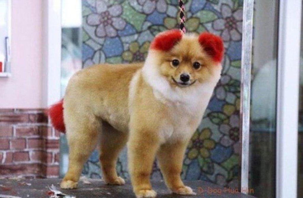 perro oreja tiñeran cabello