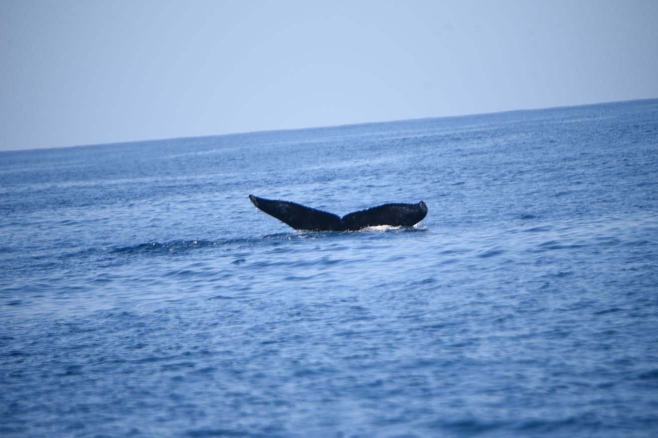 Conap captura ballenas en puerto de San José