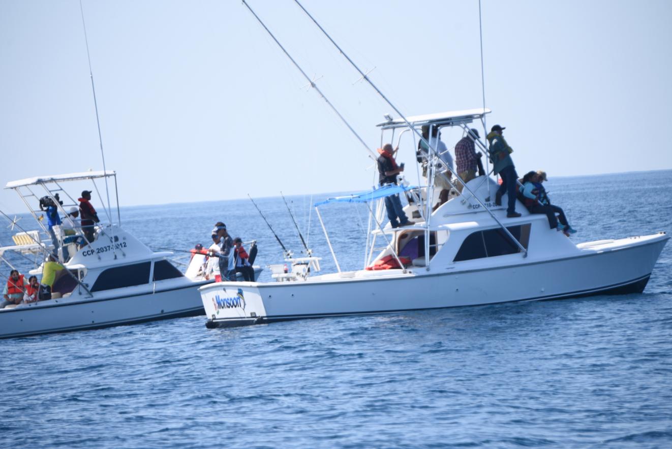 Conap avista ballenas y delfines