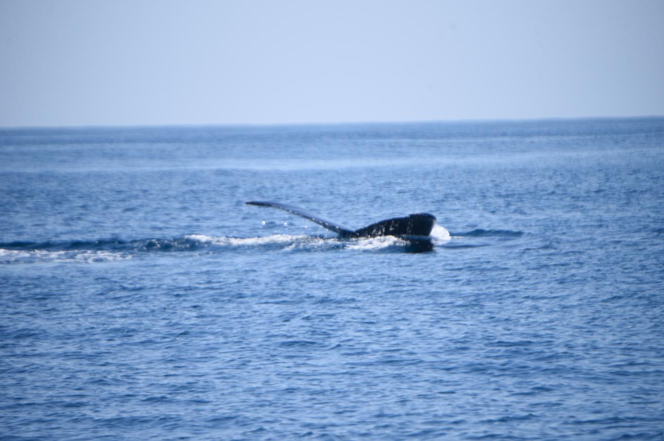 Ballenas en el Puerto San José