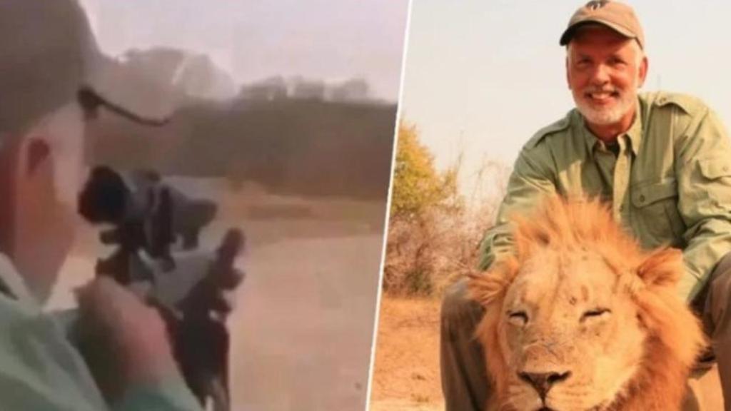 Buscan a cazador que mató a un león dormido