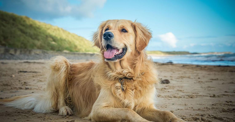 ¿Cómo cuidar a nuestro perro en verano? Foto con fines ilustrativos