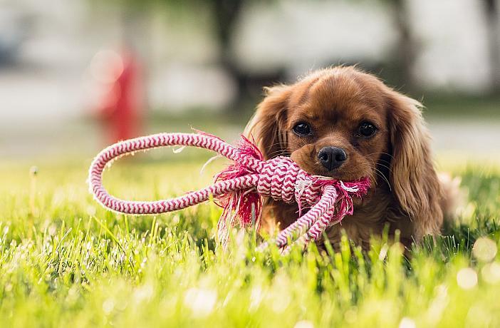 Fiel Amigo Cachorro