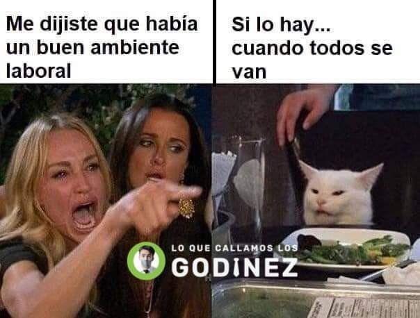 Memes del gato en la mesa y la mujer gritando