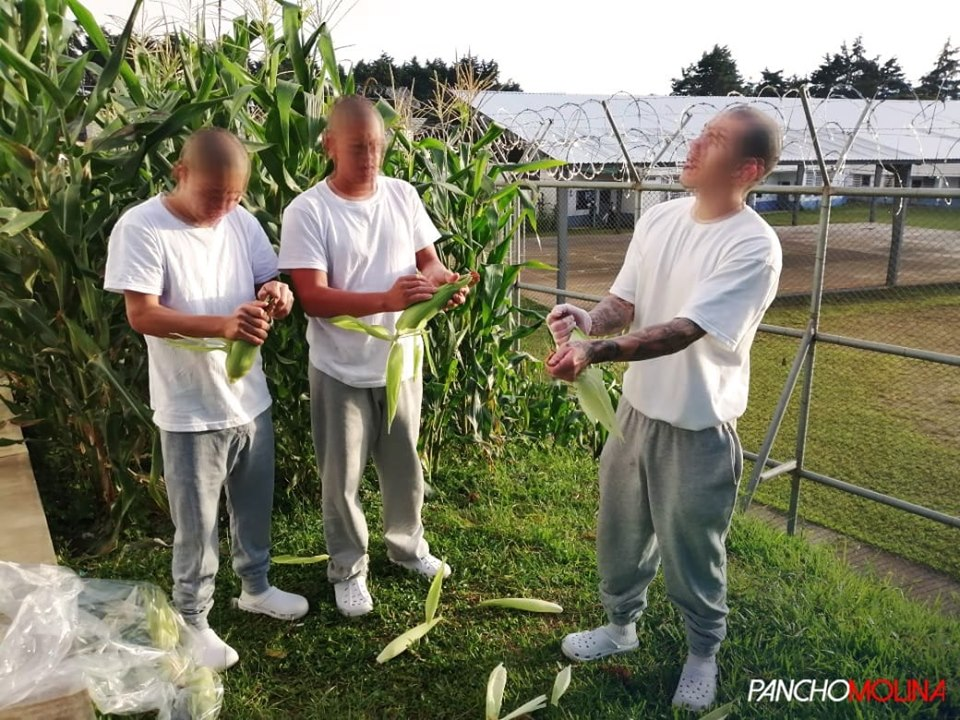 Adolescentes en conflicto con la ley penal aprenden trabajo en correccional.