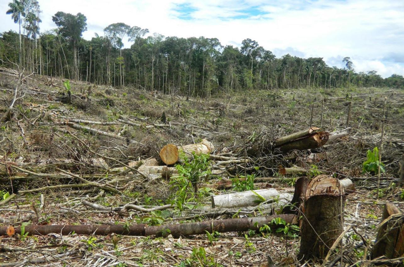la presencia del narcotráfico causa deforestación en Centroamérica