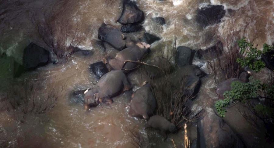 Seis elefantes mueren al caer de una cascada por salvar a una cría