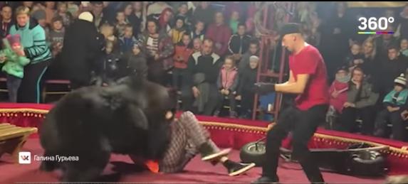 VIDEO: oso atacó a su domador durante función de circo en Rusia