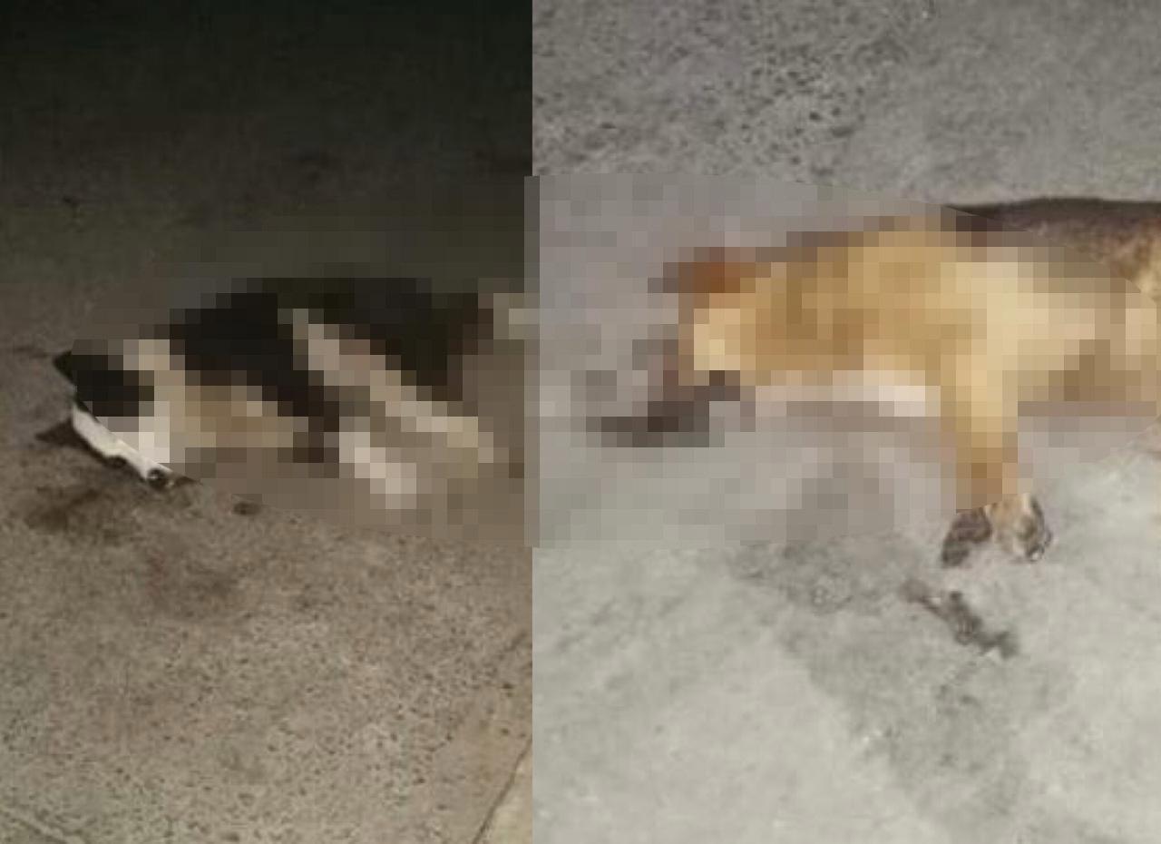 Reportan dos casos de perros muertos en Totonicapán