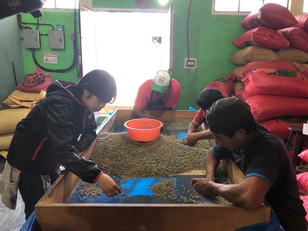 Proveedores guatemaltecos de Starbucks y Nespreesso emplean a niños