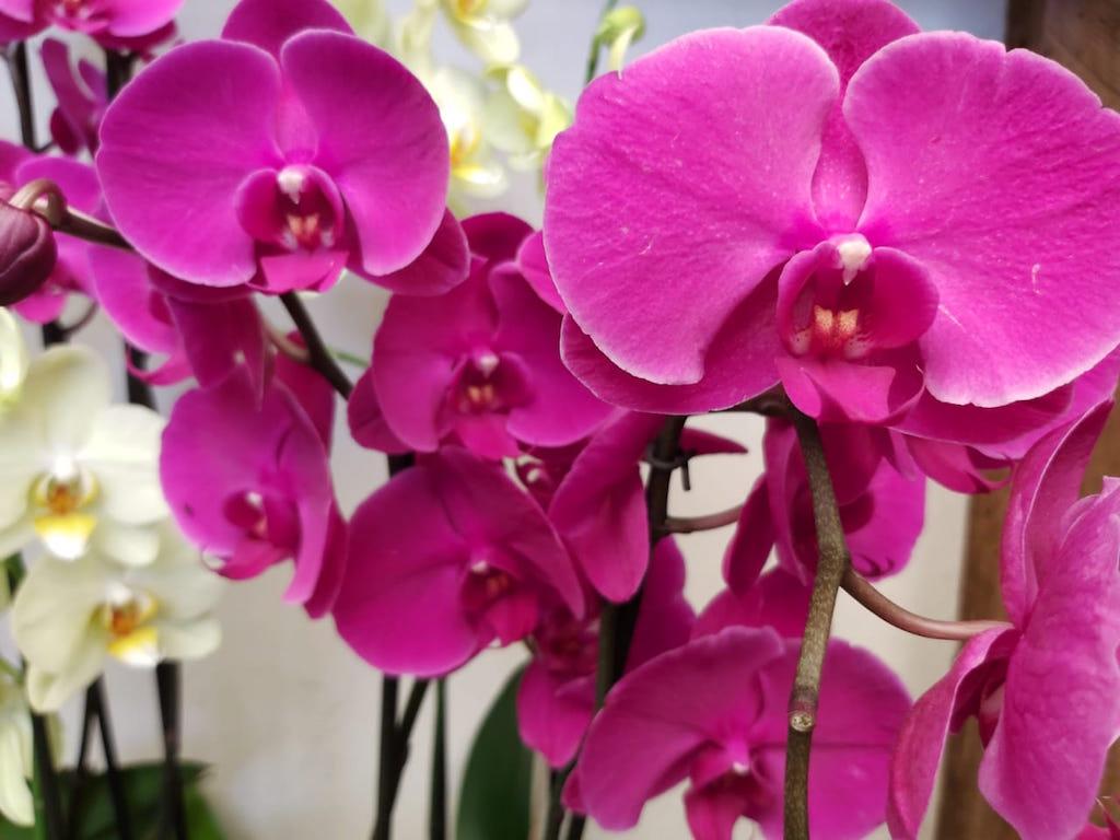 Exposición Nacional de Orquídeas Guatemala
