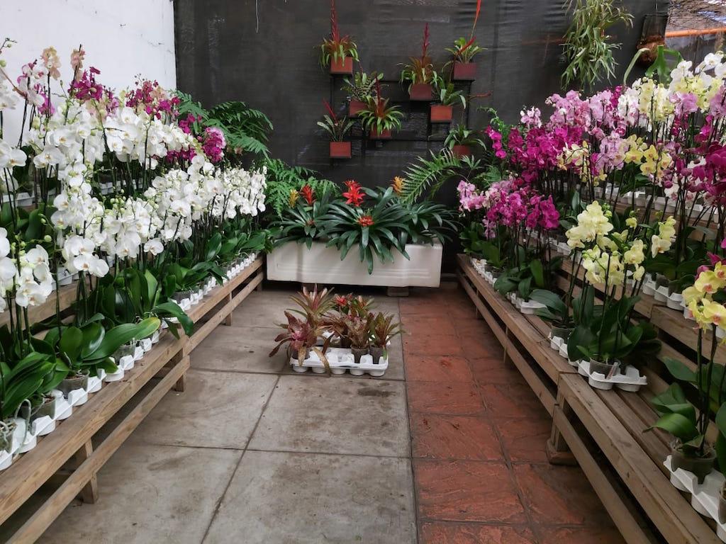 la Exposición Nacional de Orquídeas