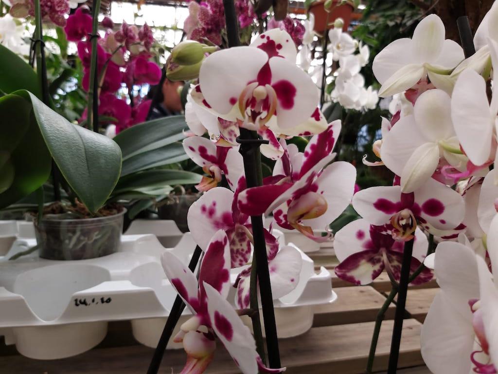 Exposición Nacional de Orquídeas 2020