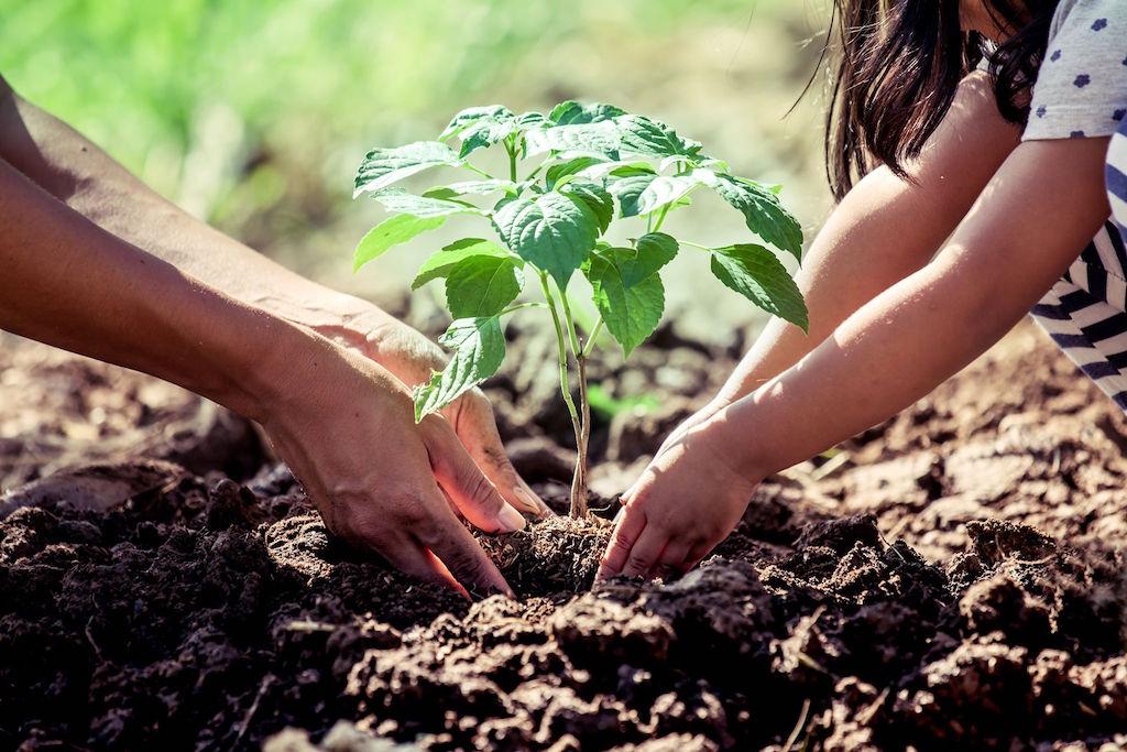Plantarse Guatemala 2020
