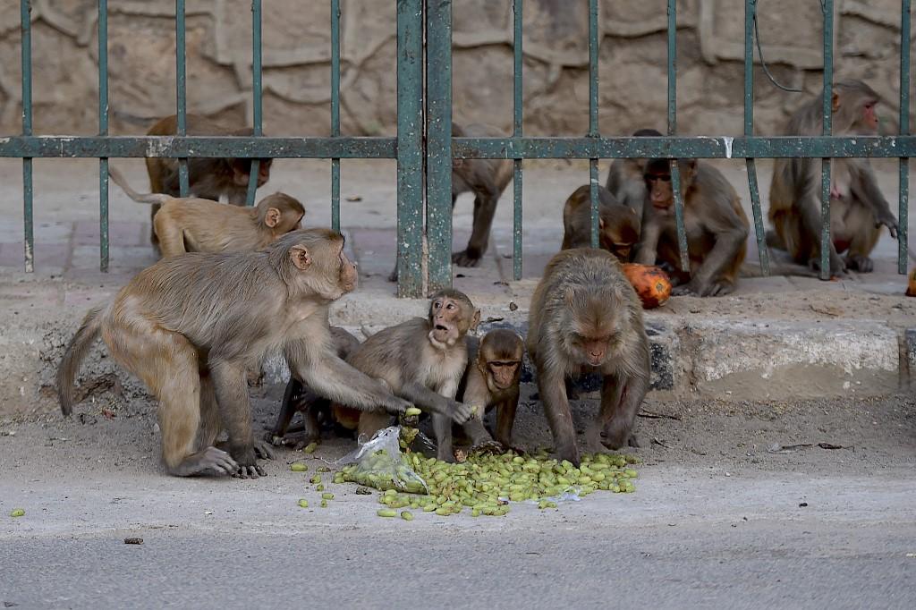 Monos roban pruebas