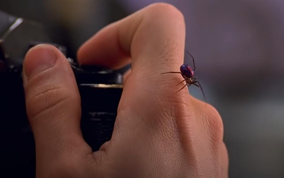 Niños picados por araña viuda negra para convertirse en spider-man