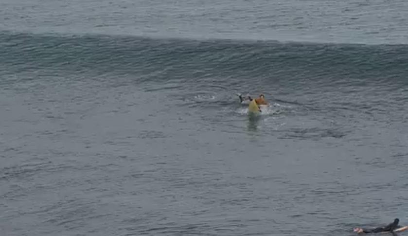 Surfista sobrevive a ataque de tiburón al darle puñetazos