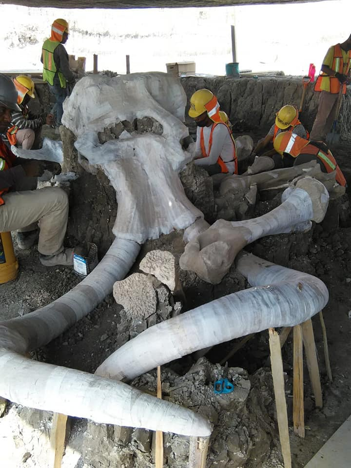 El arqueólogo adelantó que el INAH planea exponer los vestigios en una galería.