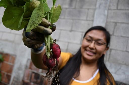 Huertos urbanos crecen en Guatemala abonados por encierro del coronavirus