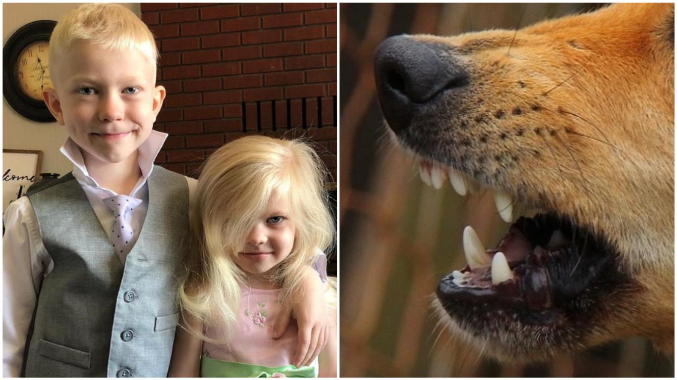 Niño salva a su hermana del ataque de un perro