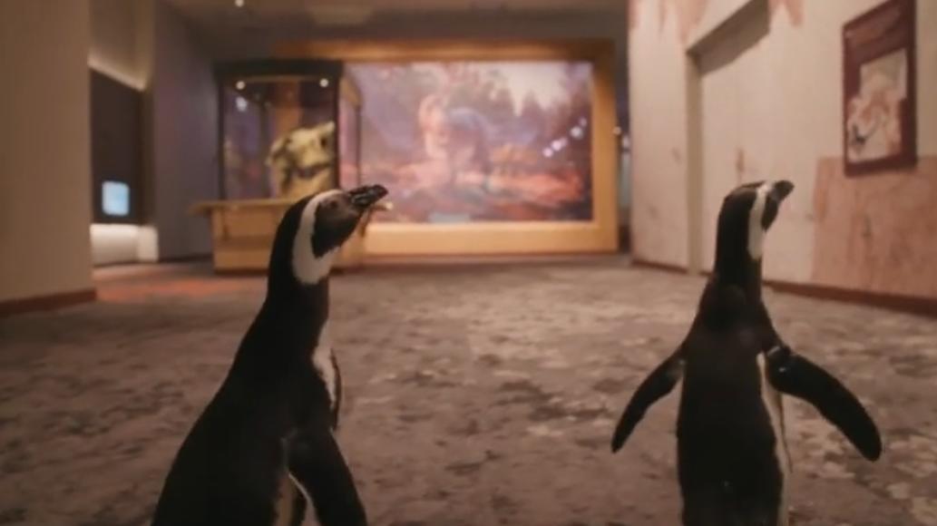 Pingüinos recorren museo en Chicago