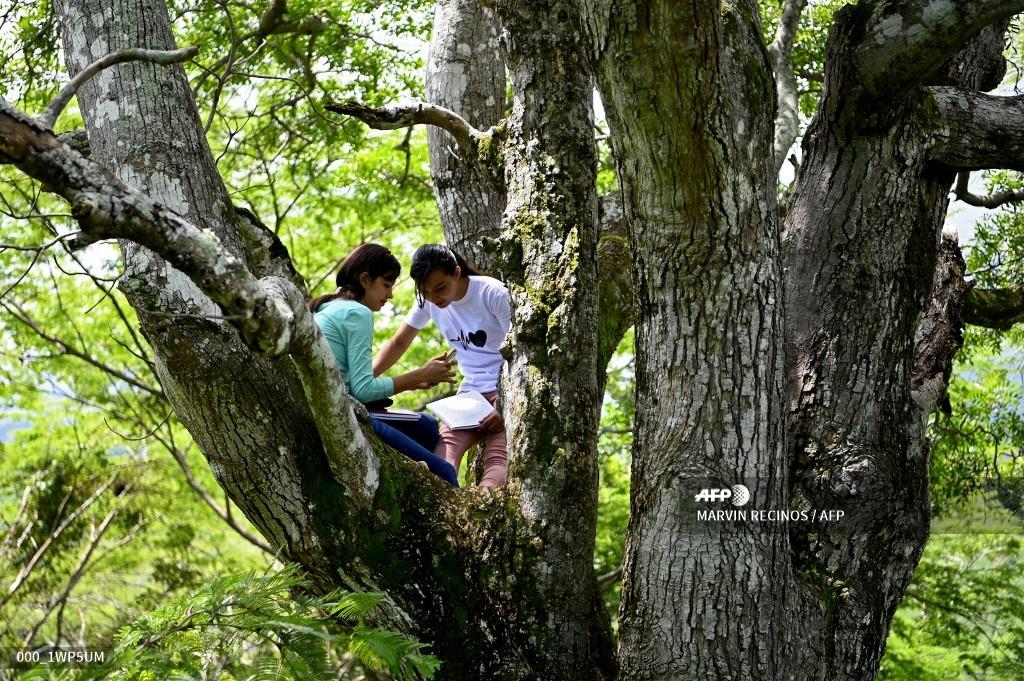 La historia de las hermanas salvadoreñas que deben subirse a un árbol para poder estudiar en línea
