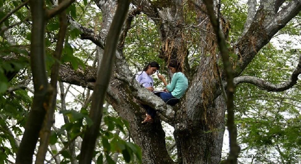 Hermanas Pimentel, subidas en un arbol