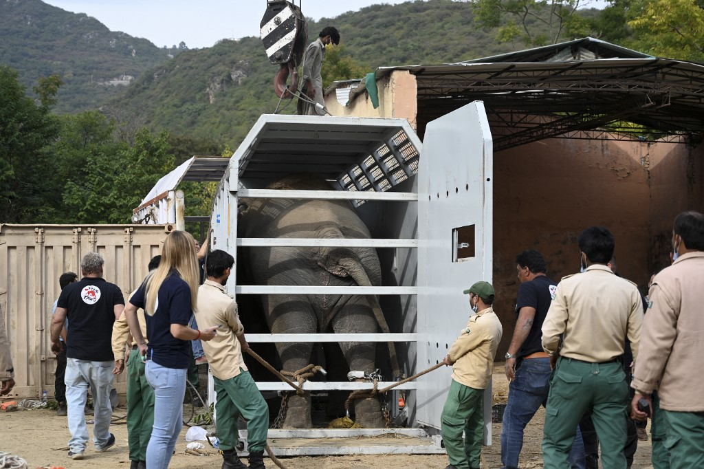 Elefante asiático Kaavan