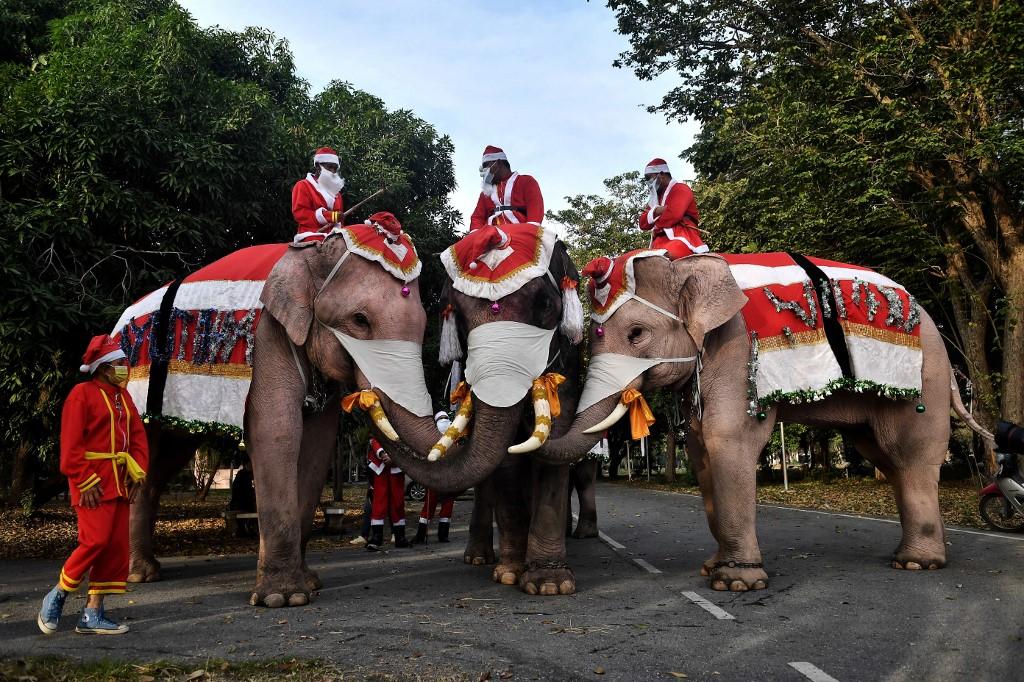 Elefantes vestidos de Papá Noel reparten mascarillas en Tailandia